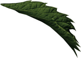folha isolada